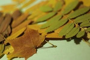 Как гладить листья утюгом – создаем прекрасный гербарий своими руками