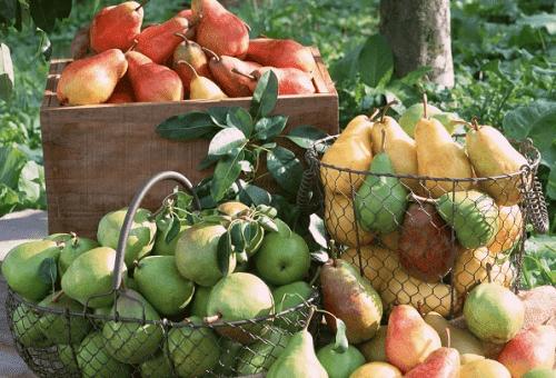Методики хранения груш летних и зимних сортов